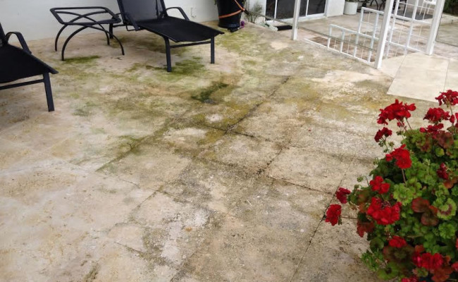 Limestone Patio with Algae and Mold